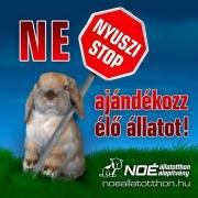 nyuszi_stop_2.jpg