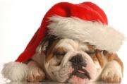 bulldog_christmas.jpg