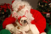 santa_with_bulldogs.jpg