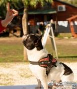 bulldog111400072.jpg
