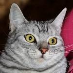 MacsKaLand Gazdis cicák