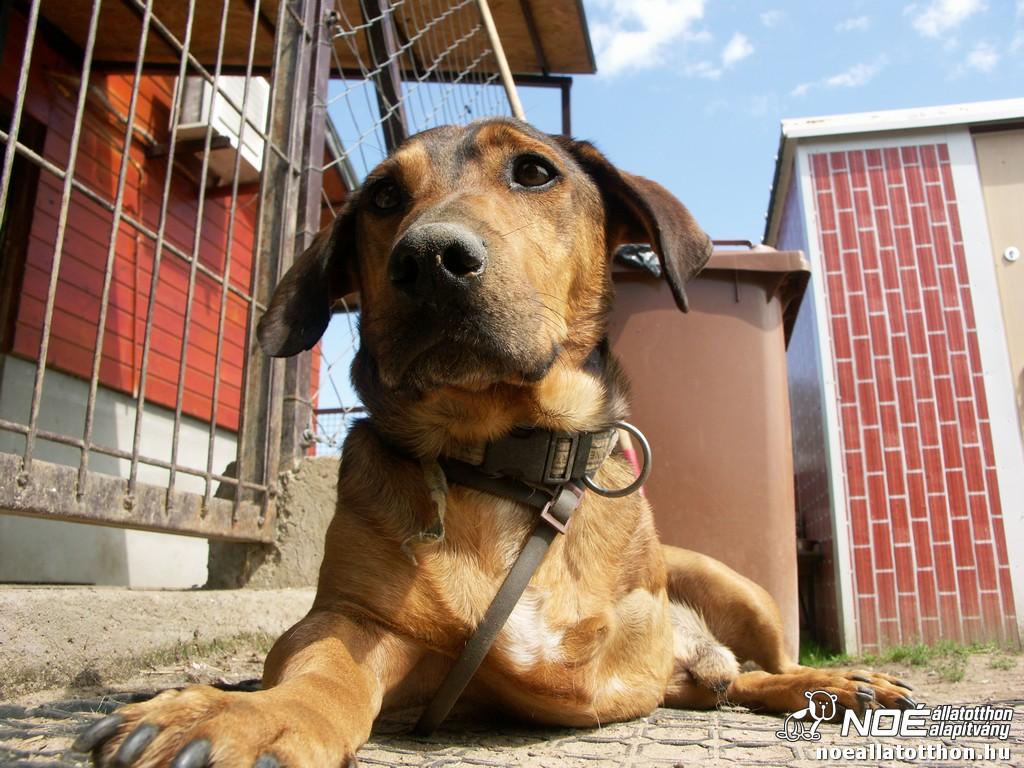 noah tierheim ungarn auch hunde mit handicap sind perfekt. Black Bedroom Furniture Sets. Home Design Ideas