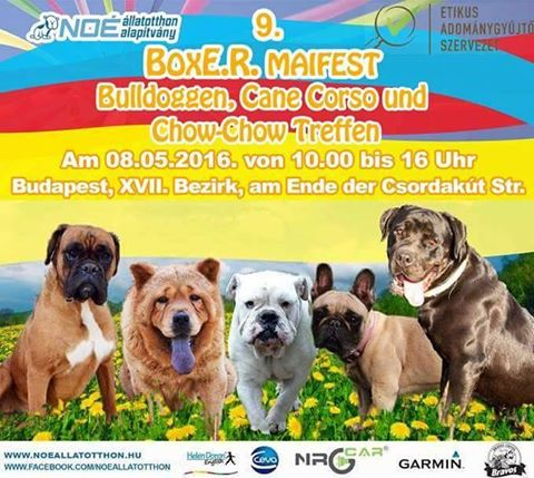 Noah Tierheim Ungarn | 9. Boxer Maifest, Bulldoggen, Cane ...  Noah Tierheim U...